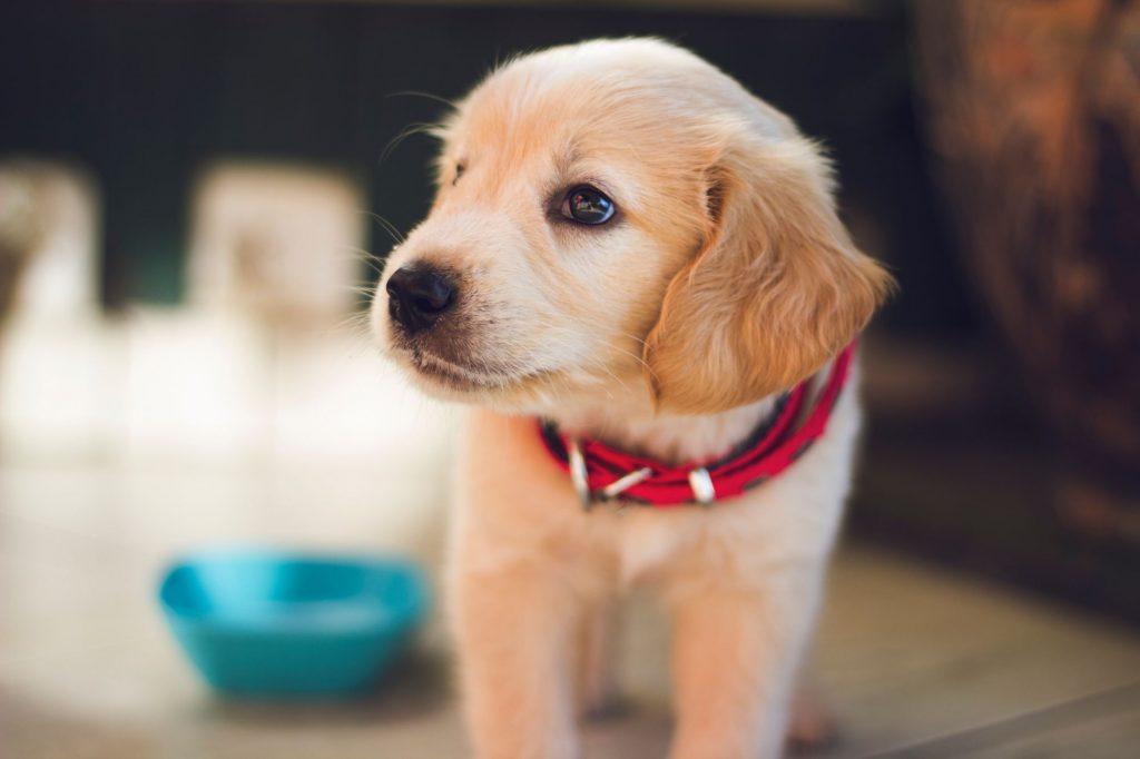 Falda Köpek Görmek Ne Anlama Gelir?