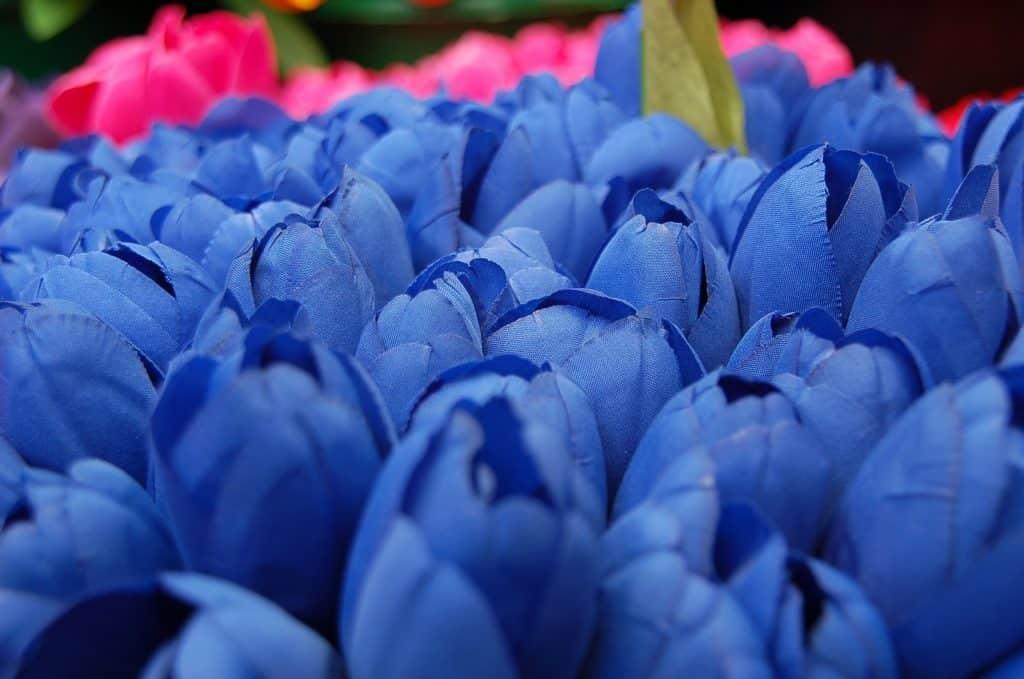 Lale Çiçeğinin Özellikleri